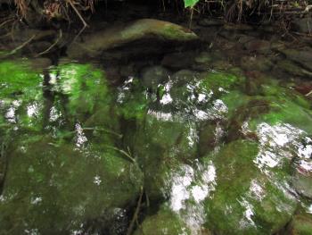下山の湧水